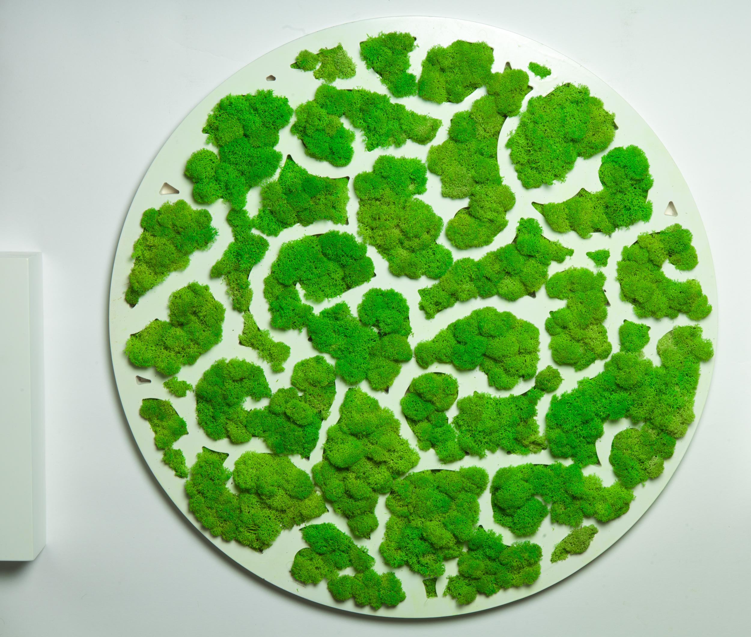 Tablou licheni, the road of nature, decor, cadou, gift