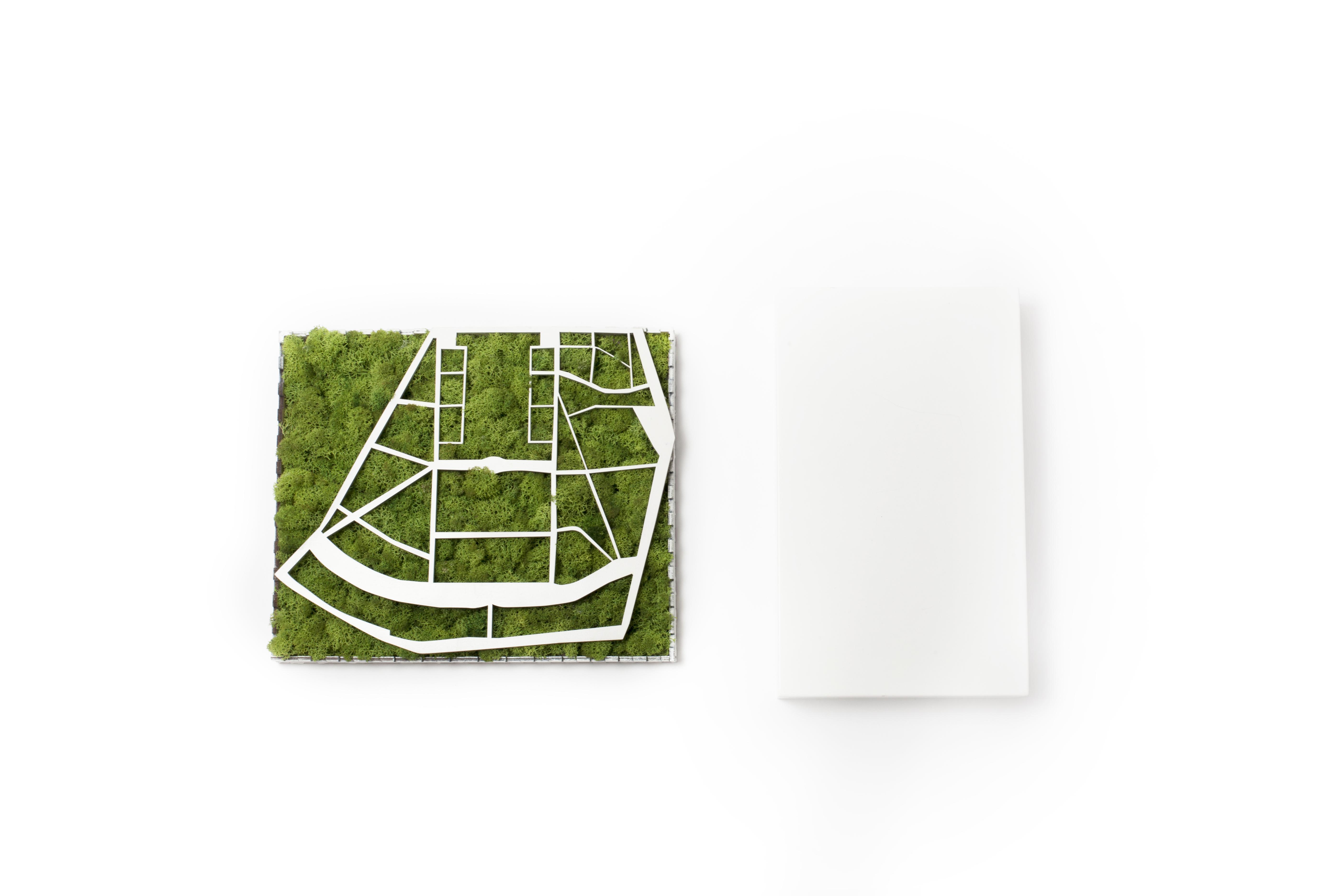Tablou licheni, city map, cadou, gift, moss