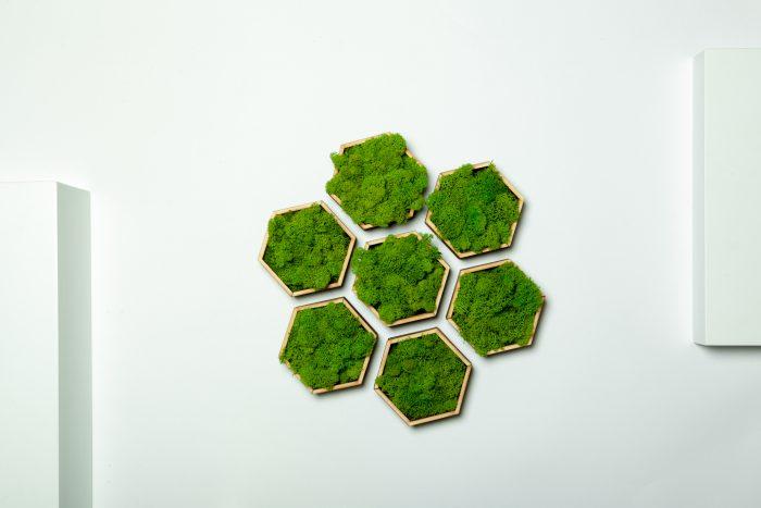 tablou licheni hexagoane, cadouri unice, gift, honeycomb